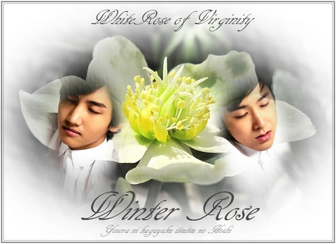 pc-winter-rose-tvxq1.jpg